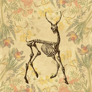 Skeleton Deer And Wildflowers