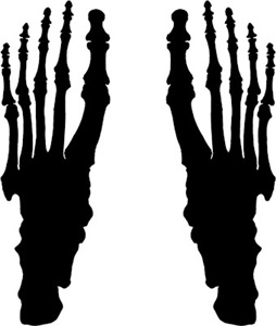 Skeleton Feet
