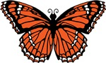 Butterfly Graphic T-shirts