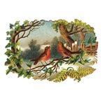 Victorian Winter Birds