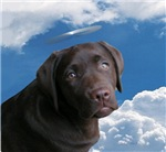 Angel Pup???