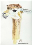 Unique alpaca, birds, dogs, cats & farm animal t-shirt & gift art