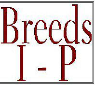 Breeds I - P