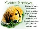 Golden Retriever Puppy Gifts