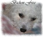 Bichon Frise Lovers Gifts