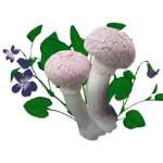 Furry Pink Mushrooms Violets