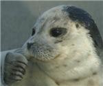 Seals & Sealions