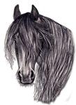 HORSES - 'FRIESIAN HORSE'