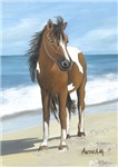 HORSES - SKEWBALD, PAINT HORSE - 'BEACH PONY'