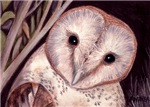 BIRDS - 'BARN OWL'