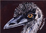 BIRDS - THE EMU
