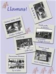 Llamas scrapbook