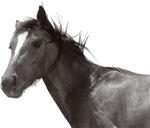Horse Design ver1