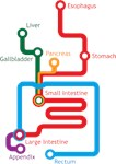 Gastrointestinal Subway Map