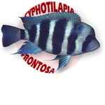 Frontosa