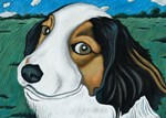 Max, the dog