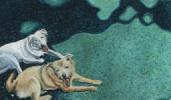 Freddie & Joey, the terriers