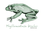 Phyllomedusa bicolor
