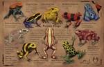 Art for Amphibians!