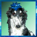 Insulted Borzoi - Ms B*tch