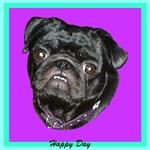 Happy Day Smiling Black Pug Merchandise