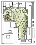 Tiger Abstract Modern Art