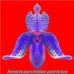Patriotic Orchids