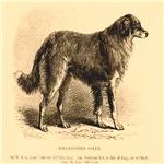Rough Coated Collie 1879