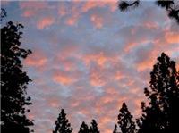 Clouds of Glory Dark Tees