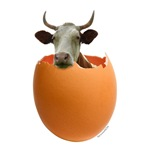 Cow Egg