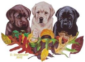 Autumn Colors Labradors
