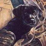 Close to My Heart, Black Lab Puppy
