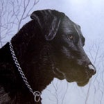 Tried and True Black Labrador
