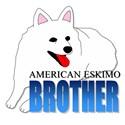 American Eskimo Brother