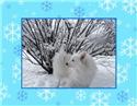 Snow Eskie