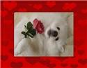 Eskie Valentine