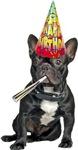 French Bulldog Birthday