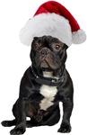 French Bulldog Christmas