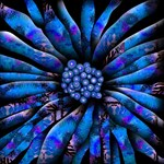 Wild Blue Sunflower