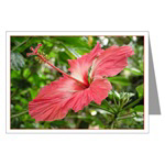 ...Hibiscus...