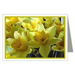 ...Daffodils 01...