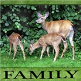 Deer - Twin Fawns