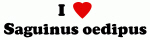 I Love Saguinus oedipus