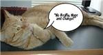Hope and Change Orange Tabby Cat