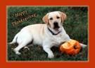 Labrador Retriever Holiday & Occasion Cards