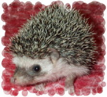 Pepperocini's Baby Picture