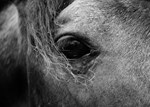 Through the Eye of a Horse