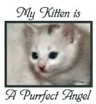 My Kitten is a Purrfect Angel