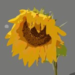 Beautiful Abstract Sunflower Floral Art