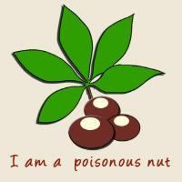 I am a poisonous nut